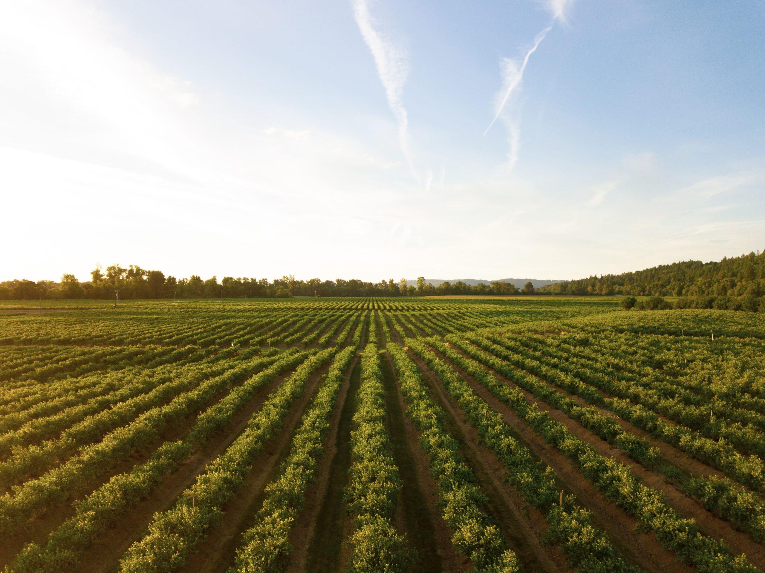 Importaciones agropecuarias del Perú